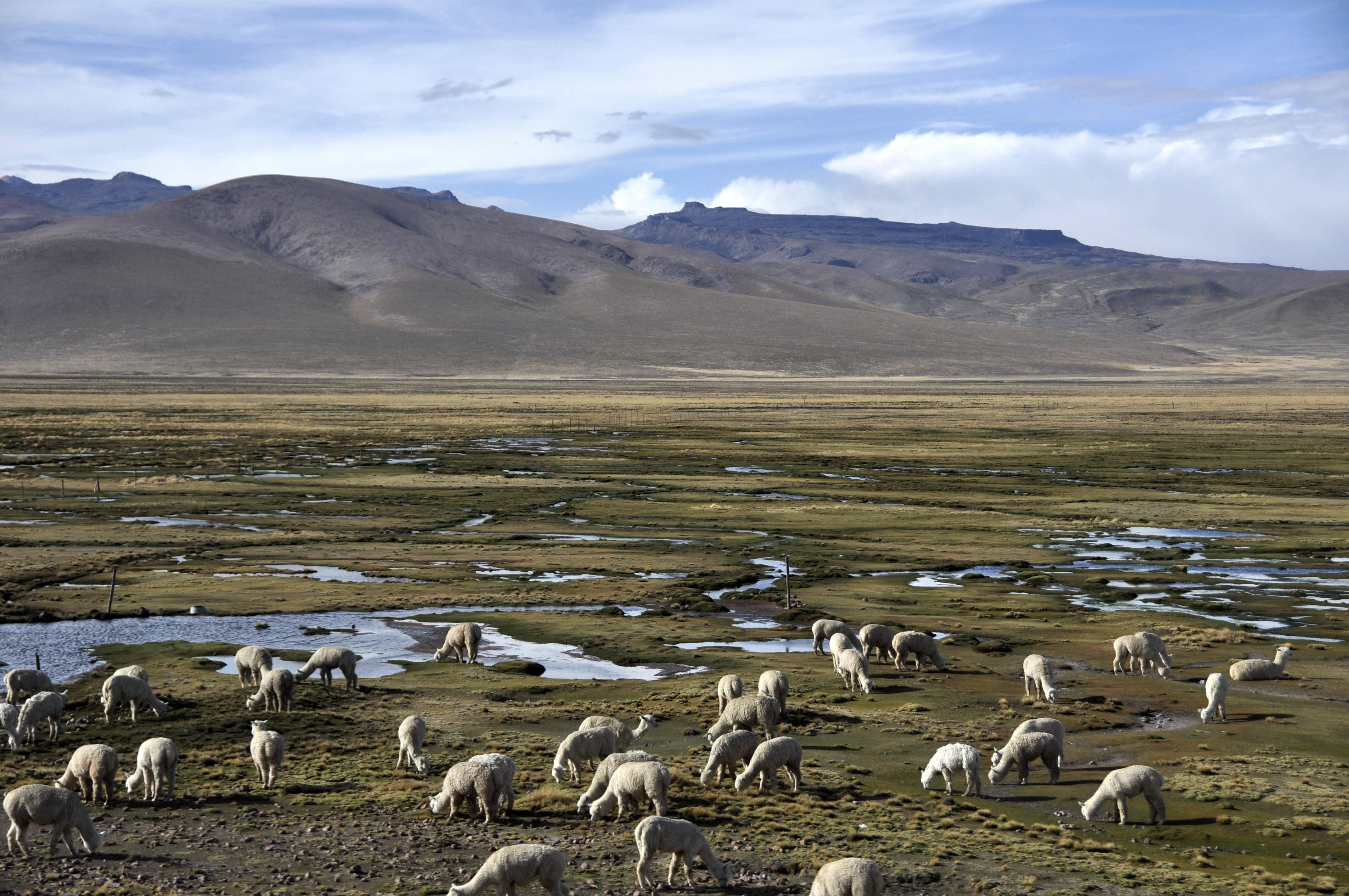 Peru 2013 Cañon del Colca11