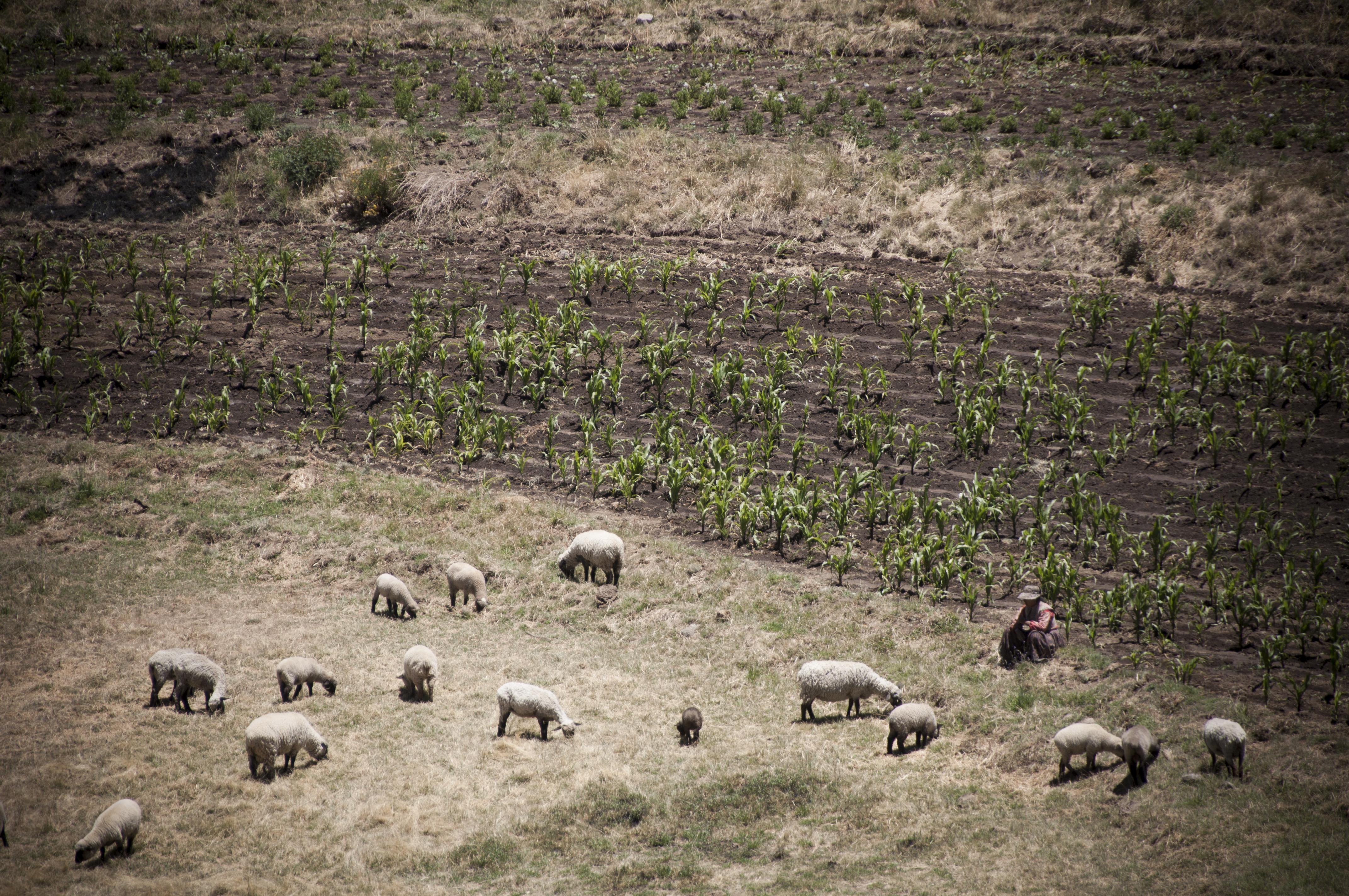 Peru 2013 Cañon del Colca Mirador del condor_ Cabanaconde4