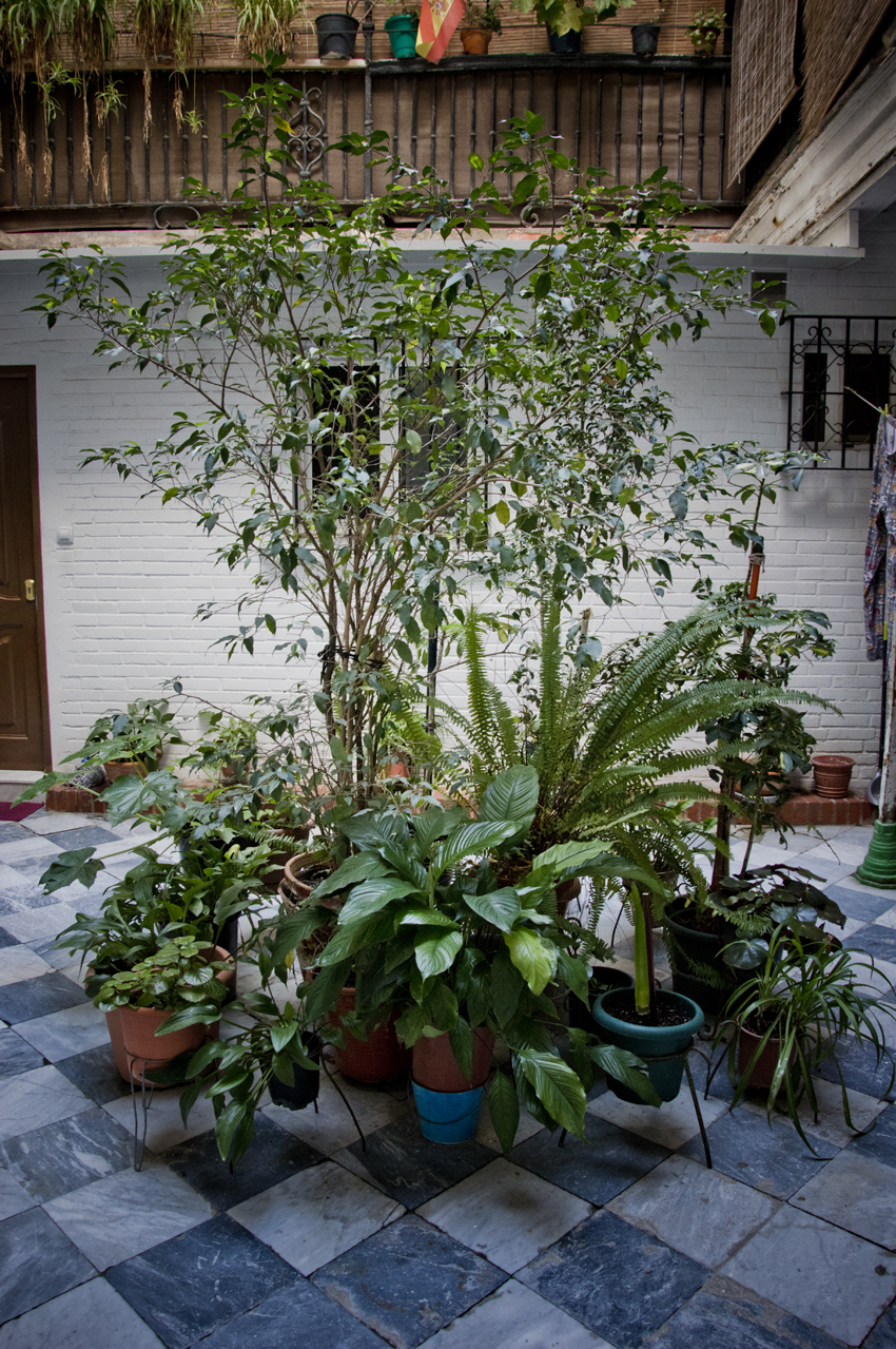 Cadiz-barrio-historico-patios-sonsoles-lozano-1