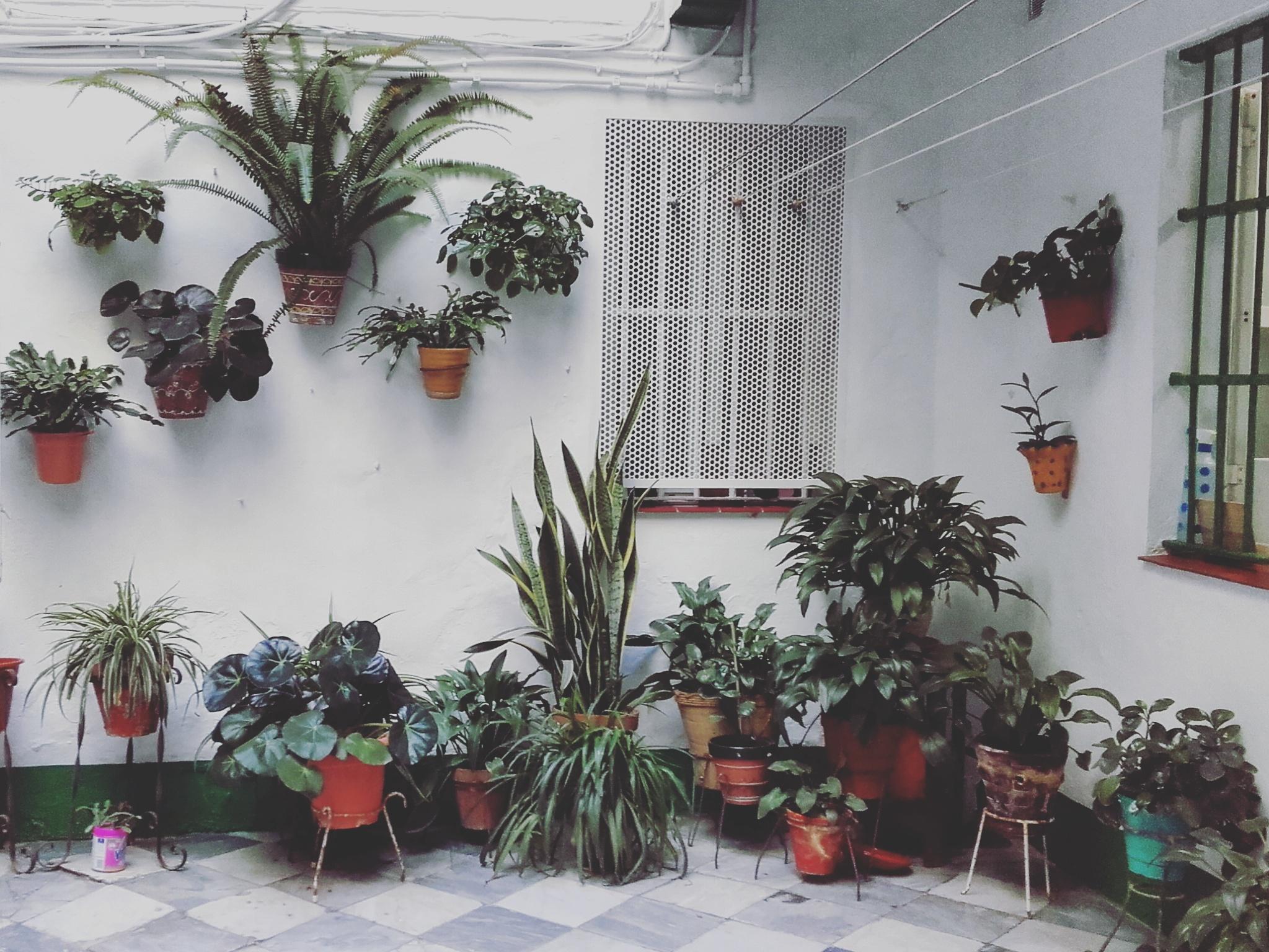 Cadiz-patio-andaluz-sonsoles-lozano